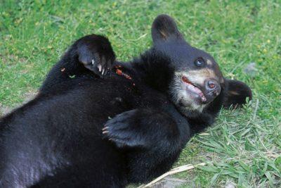 alaska_animals_105