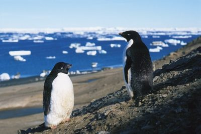 antarctica_012