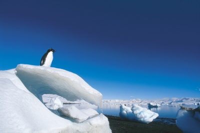 antarctica_013
