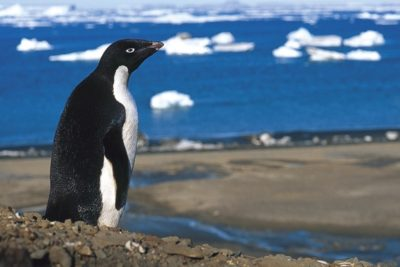 antarctica_015