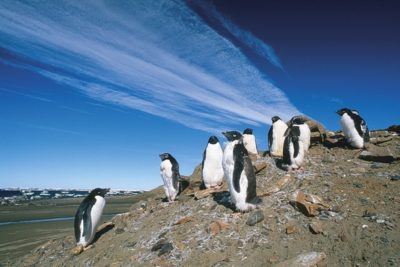 antarctica_016