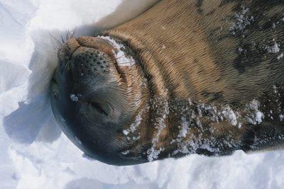 antarctica_018