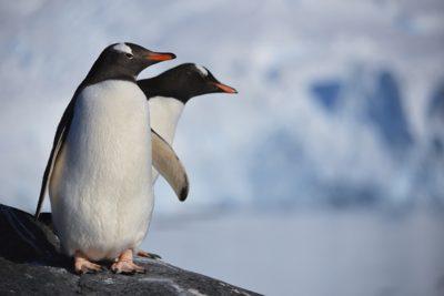 antarctica_062-2