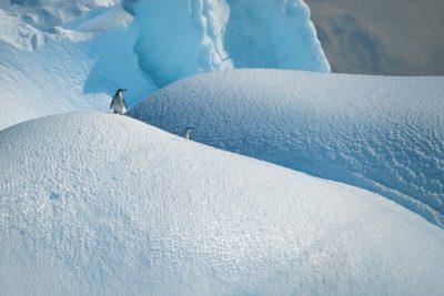 antarctica_074