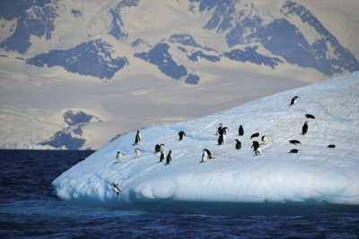 antarctica_076