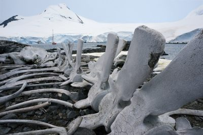 antarctica_104-2