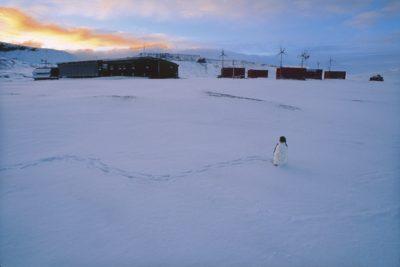 antarctica_254
