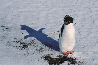 antarctica_284