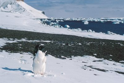 antarctica_285