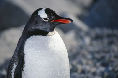 antarctica_animals2_002