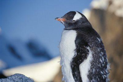 antarctica_animals2_003