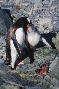 antarctica_animals2_005