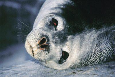antarctica_animals2_028