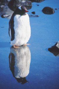 antarctica_animals_071