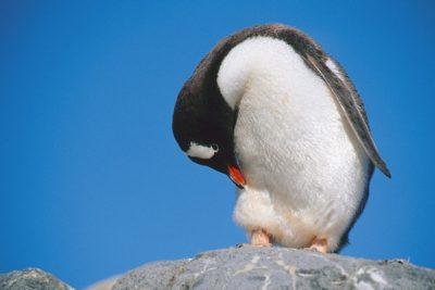 antarctica_animals_074