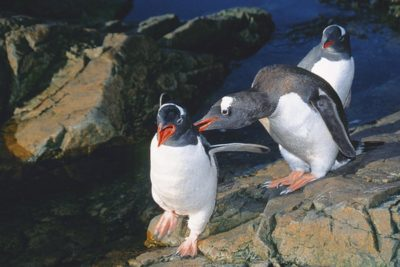 antarctica_animals_075