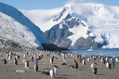antarctica_animals_076