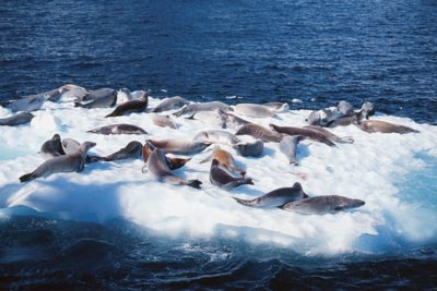 antarctica_animals_079