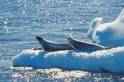 antarctica_animals_080