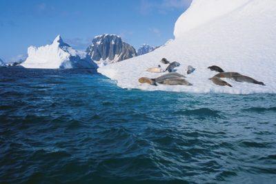 antarctica_animals_081