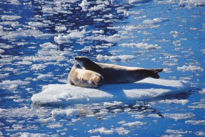 antarctica_animals_082