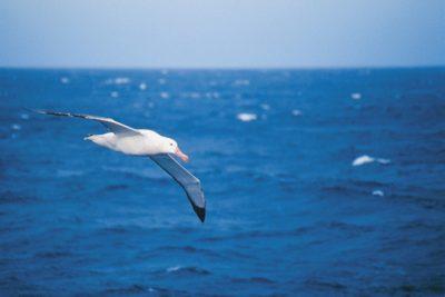 antarctica_animals_086