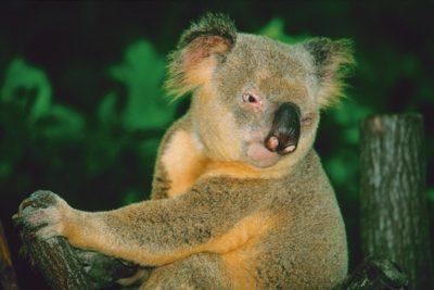 australia_animals2_026