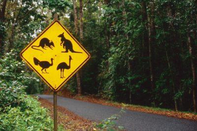 australia_animals2_030