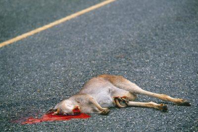 australia_animals2_031