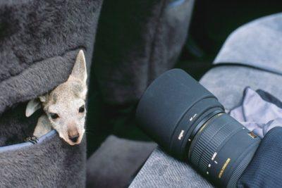 australia_animals2_032