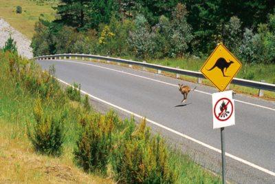 australia_animals_113