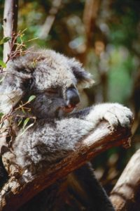 australia_animals_120