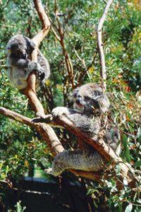 australia_animals_121