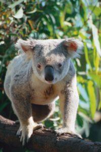 australia_animals_122