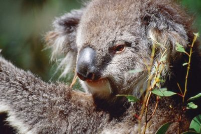 australia_animals_123
