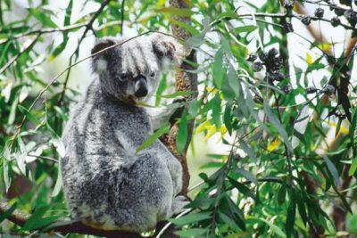 australia_animals_124