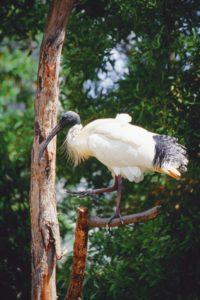 australia_animals_128