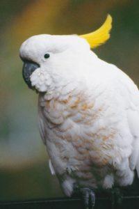 australia_animals_129