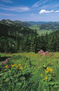 austria_077