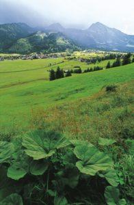 austria_080