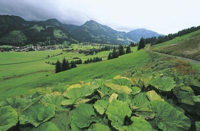 austria_091