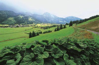 austria_092