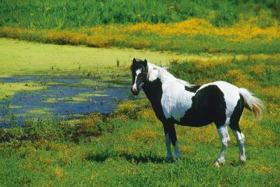corsica_animals144