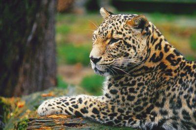 cr_animals2_013