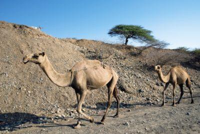 eritrea_120