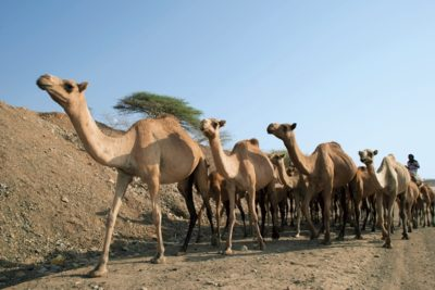 eritrea_121
