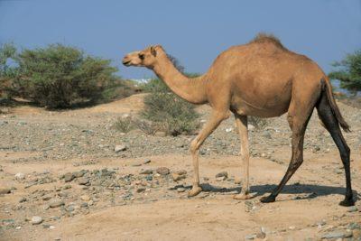 eritrea_134