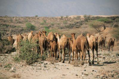 eritrea_135