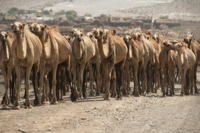 eritrea_151