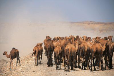 eritrea_158